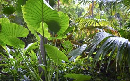 DSC_0059 jungle